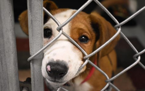 Celebrating 50 years and the importance of dog adoption